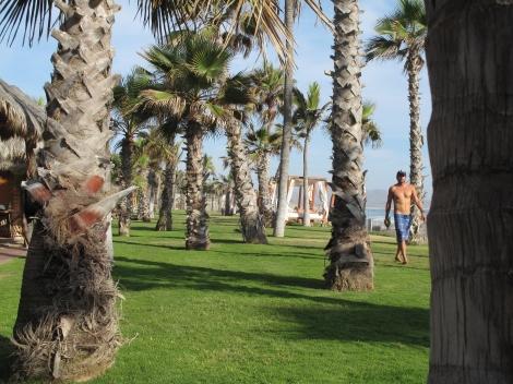 Cerritos Lawn