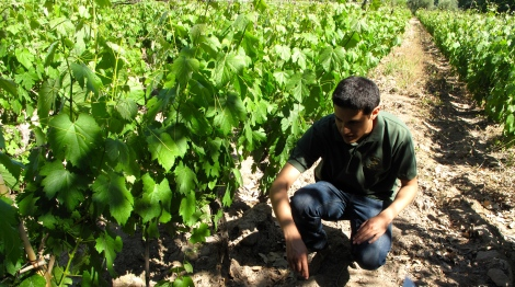 Vineyard tour at Bodega Torrentes