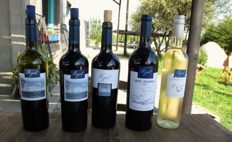 Azul Wines - only use 7 hectors of their 100 for their wines.