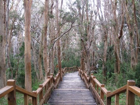 Arrayanes Forest Walk