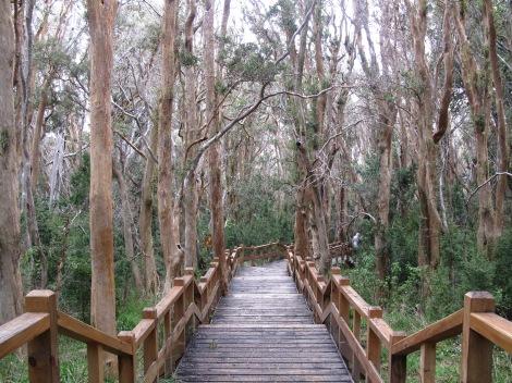 Arrayanes Forest Walk