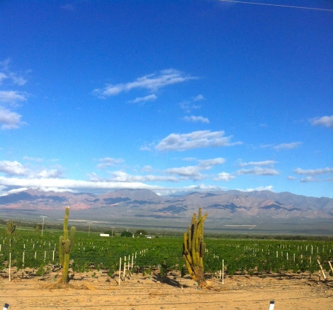 Cafayette desert wine country
