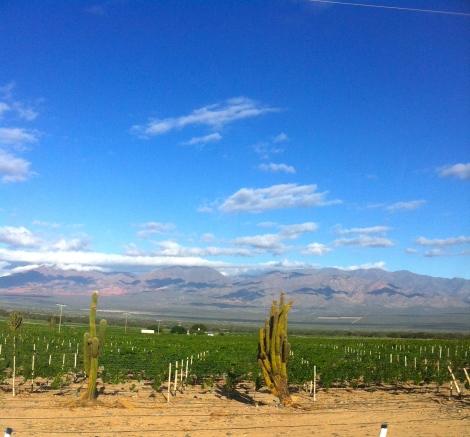 Cafayette desert wine country
